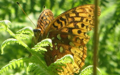 The butterfly effect & discouragement